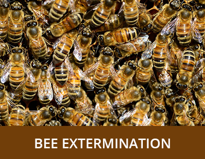 Bee Extermination - ABZ Pest