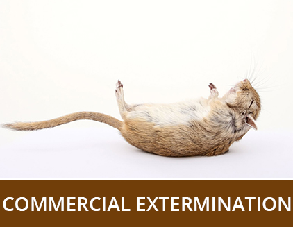 Commercial Extermination - ABZ Pest