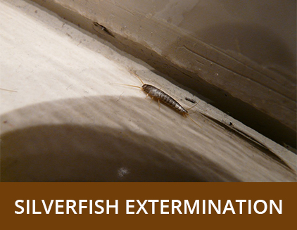 Silverfish Extermination - ABZ Pest